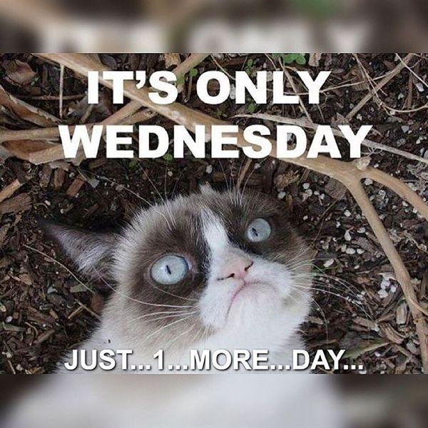 Funny Wednesday Memes 1