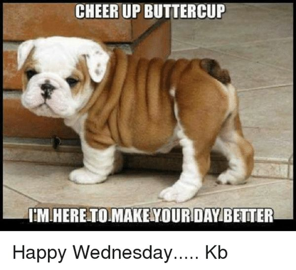 Funny pictures with quotes to wish you a happy Wednesday 4th