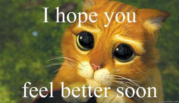 cat feel better