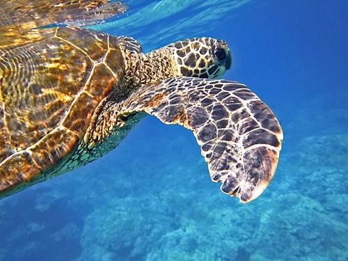 snorkel titles