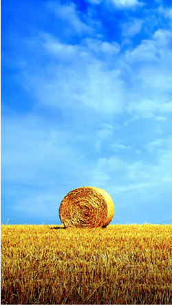 Lonely Bale of Hay