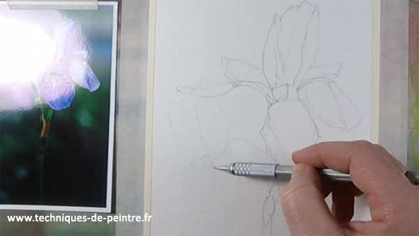 dessiner-fleur-iris-techniques-de-peintre