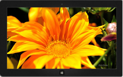 Download two new flowers based Windows themes
