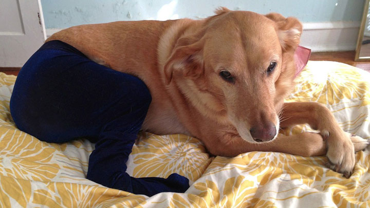 Pet Wearing Tights New Crazy Fashion On Internet Photo