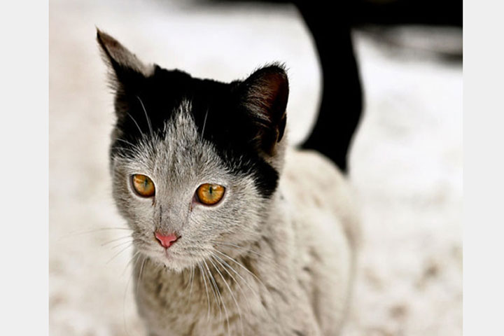 12 Unique Cats In The World Because Of Unique Markings On