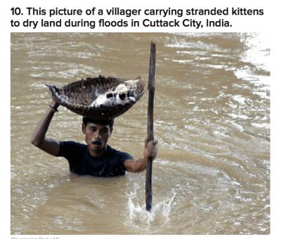 Stranded Kittens