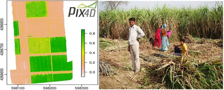 The sugar industry is the second largest agriculture-based industry after textiles and Pakistan ranked 15th in the world in sugarcane production