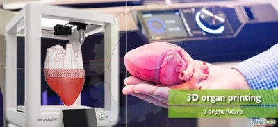 3D organ printing – A bright future