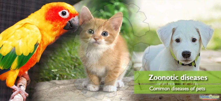 Common zoonotic diseases of pets