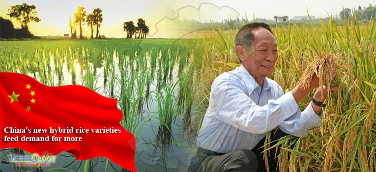 China's new hybrid rice varieties feed demand for more