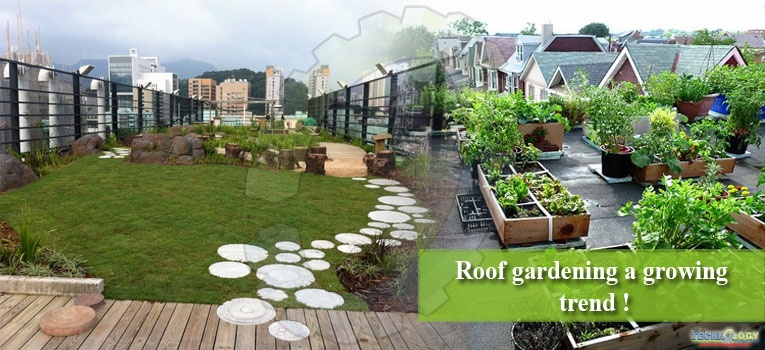 Roof gardening a growing trend !