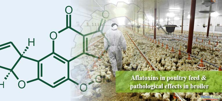 Aflatoxins in poultry feed & pathological effects in broiler