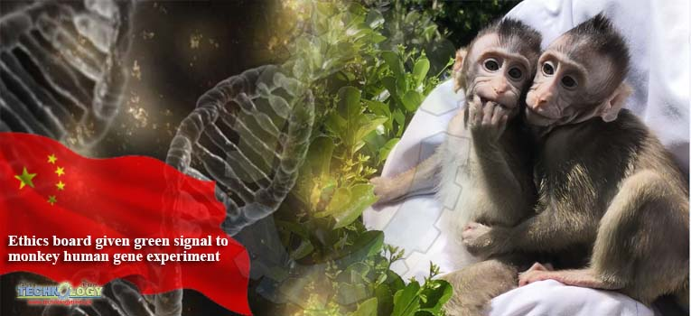Ethics board given green signal to monkey human gene experiment