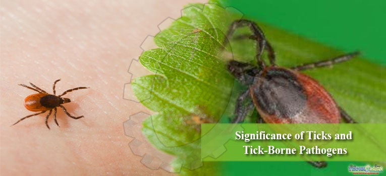 Significance of Ticks and Tick-Borne Pathogens