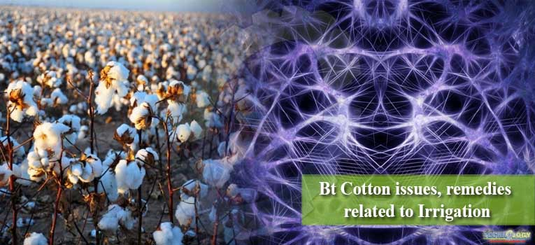 Bt Cotton issues, remedies related to Irrigation