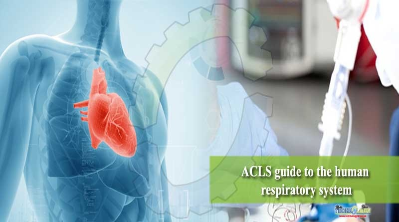 ACLS guide to the human respiratory system