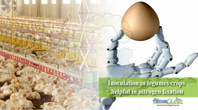 Artificial intelligence in poultry industry