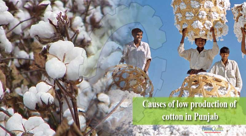 Causes of low production of cotton in Punjab