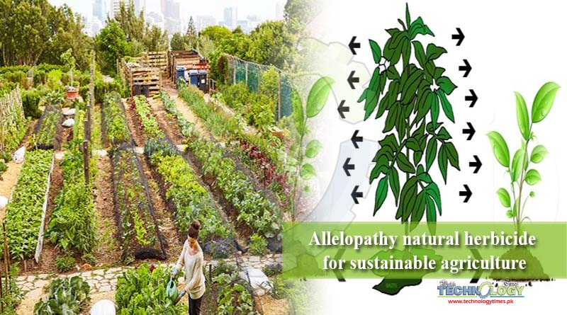 Allelopathy natural herbicide for sustainable agriculture