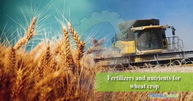 Fertilizers and nutrients for wheat crop