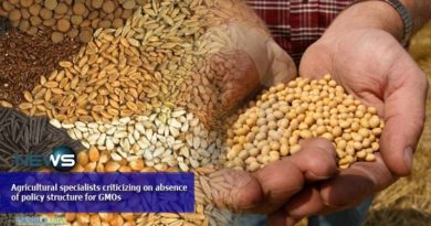 Agricultural specialists criticizing on absence of policy structure for GMOs