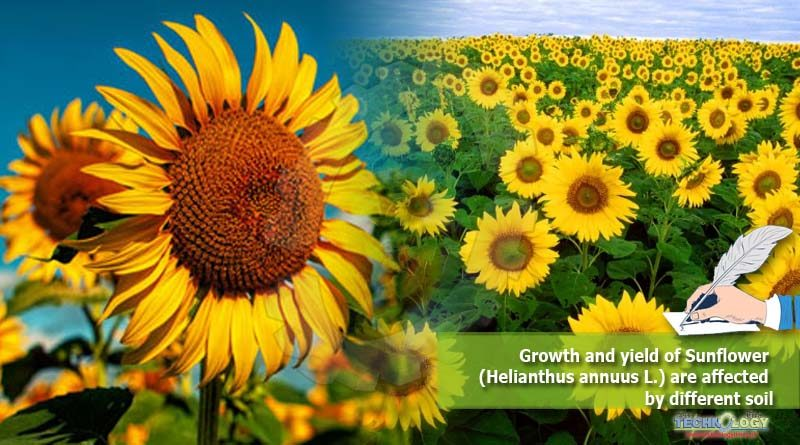 Growth and yield of Sunflower (Helianthus annuus L.) are affected by different soil