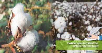 Pakistan-again-far-behind-the-cotton-production-target