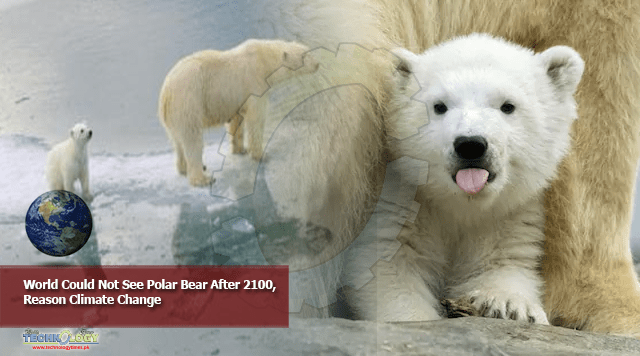 World Could Not See Polar Bear After 2100, Reason Climate Change