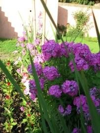 Shalimar garden flower bunch
