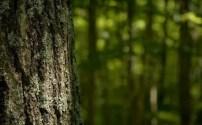 Woods Free Download Wallpaper