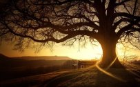 sunset beauty Free Download Wallpaper