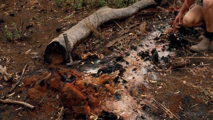 Bushfire soil