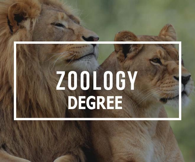 Degree in Zoology
