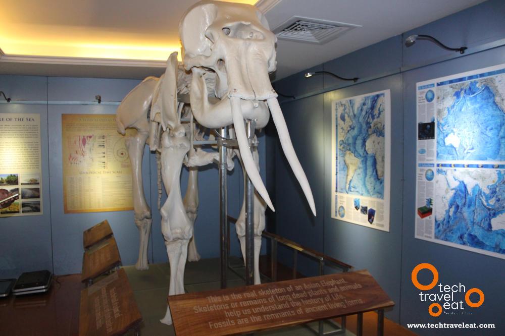 periyar-tiger-reserve-interpretation-centre20