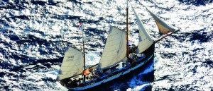 tecla sailing in australia
