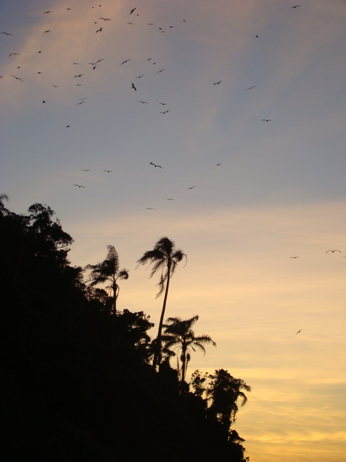 tropical island in brazil