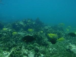 tecla crew diving in brazil