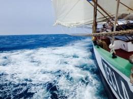 Tecla sailing with a breeze