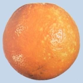 Cochinilla en naranja navel - Limite segunda