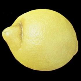 Araña en limon Verna - Limite primera