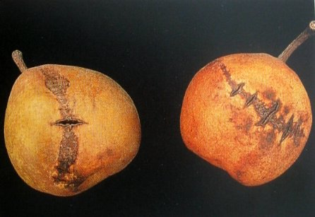 Carencias de Boro en Manzano