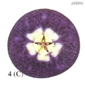Test almidon fruta pepita tipo circular estado 04