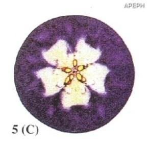 Test almidon fruta pepita tipo circular estado 05