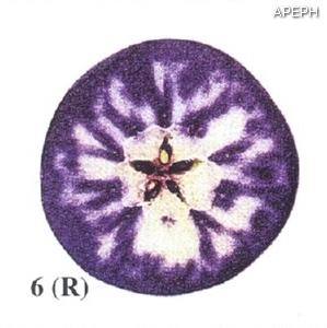 Test almidon fruta pepita tipo radial estado 06