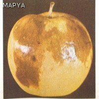 Escaldadura - Manzana