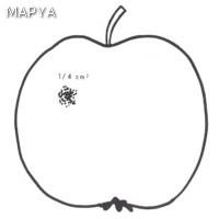 Manzana defectos en la epidermis 05