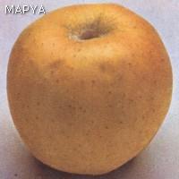 Manzana con defectos de forma, de desarrollo y de coloración.