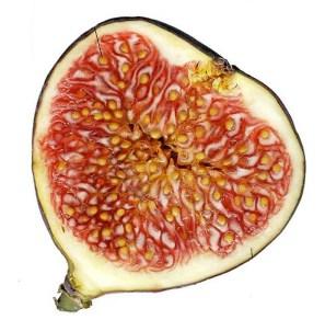 Partes de fruto - Higo