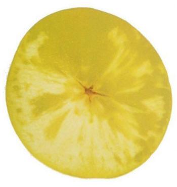 Vitrescencia en manzana