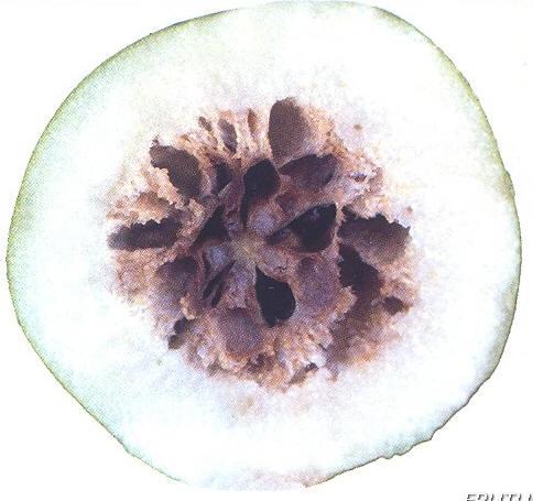 Corazon Pardo peras manzanas